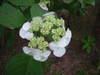 2007_0707karuizawa0007_3