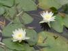 2007_0731tuchiura0031_2